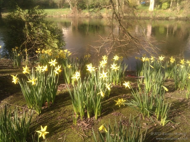 Delightful daffodill-i-oos!