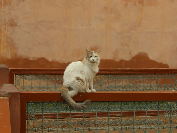 Cat at the Saadian Tombs, Marrakech, Morocco