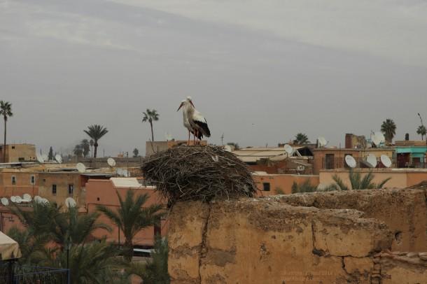 White_storks_badi_palace_marrakech_morocco.jpg