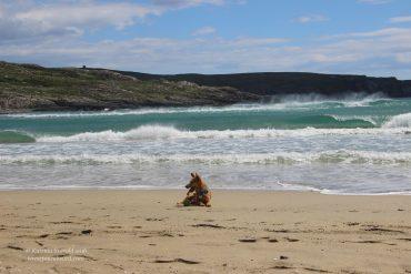 Barleycove Beach featuring @gobiterrier