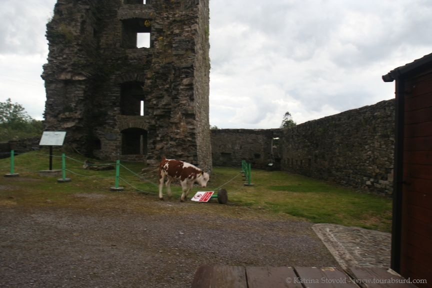 Calf vanquishing a sign post inside a castle.