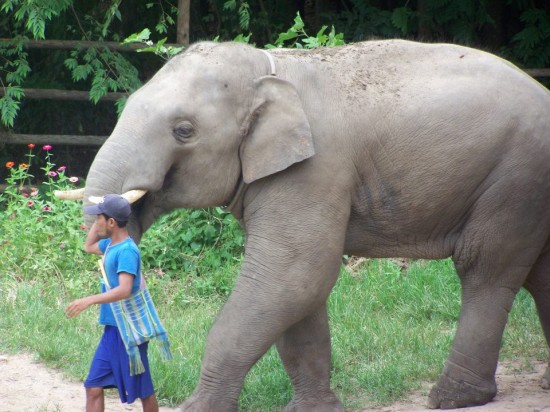 at the Elephant Nature Park