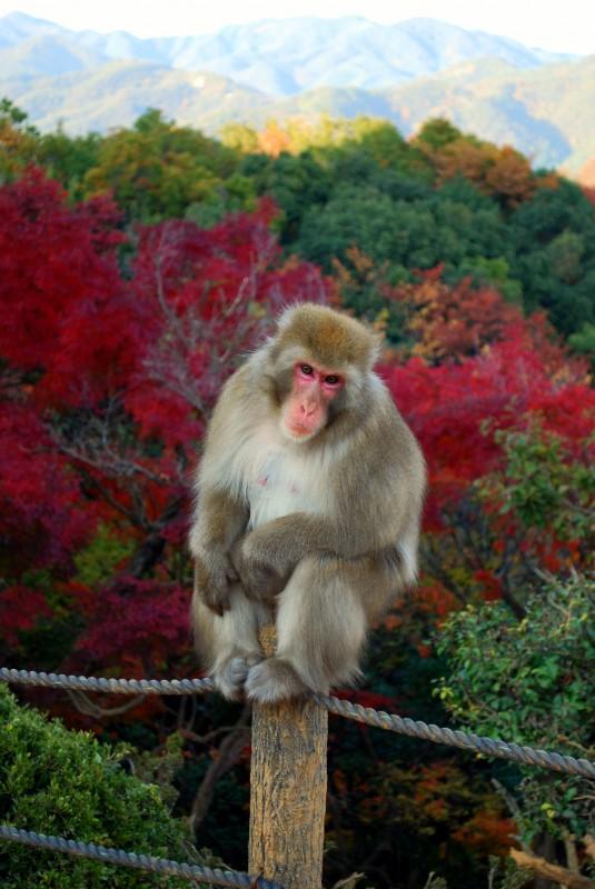 Arashiyama area near Kyoto