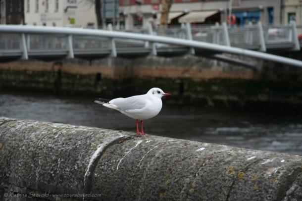 gulls and buoys