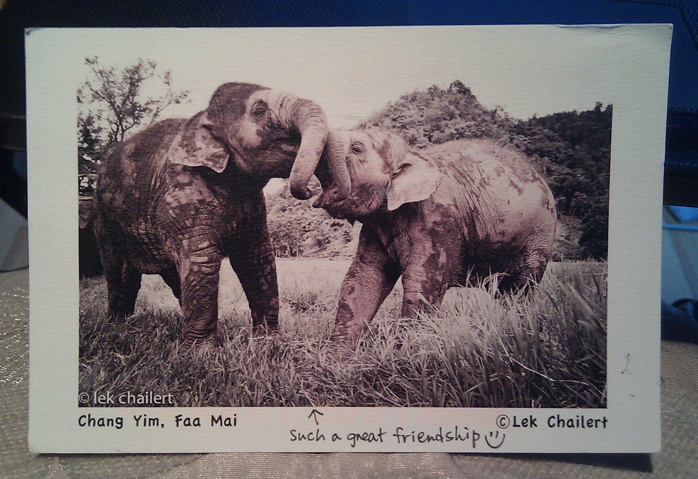 From the Elephant Nature Park, but Lek Chailert