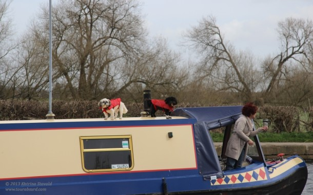 It's a dog's life on the canals...