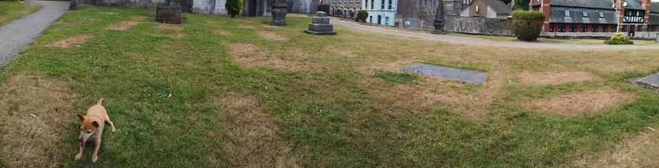 A panoramic view of a grassy area around the back of St. Fin Barre's Cathedral in Cork. The grass is looking thirsty and many brown patches reveal where gravestones used to be present.